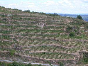 rhone-nord-004 régions viticoles françaises